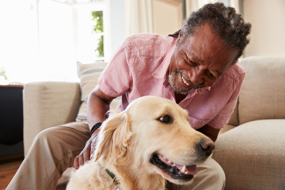 How to Create an Estate Plan That Includes Your Pet